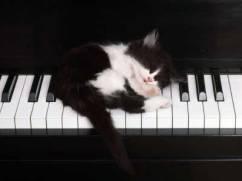pet-rede-gato-dormindo-10