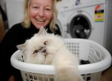 Gato sobrevive após banho em máquina de lavar roupas