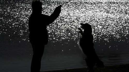 petrede-cachorro-imita-dono