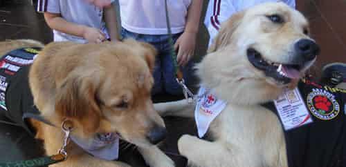 Cães auxiliam no tratamento de doentes em Curitiba