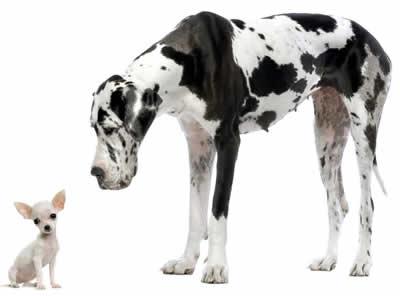 Como criar um cachorro grande em um pequeno apartamento?