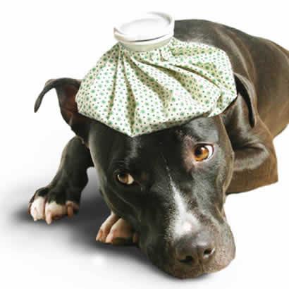 petrede-cachorro-doente