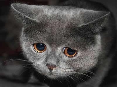 Não posso mais ficar com meu animalzinho de estimação!
