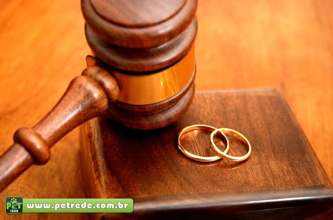Projeto de lei quer guarda de animais de casal divorciado