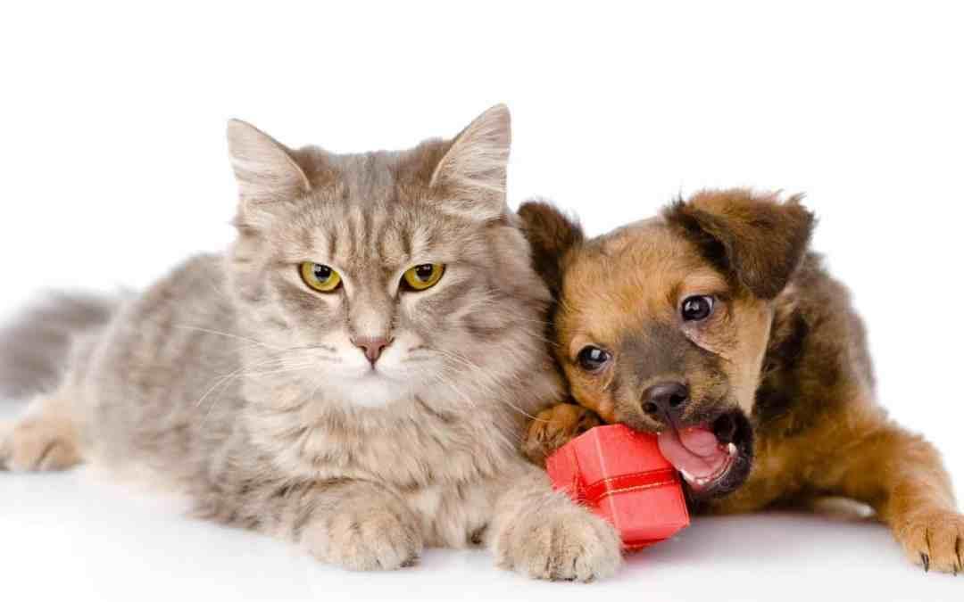 Pet Shop oferece presentes para bichos de estimação