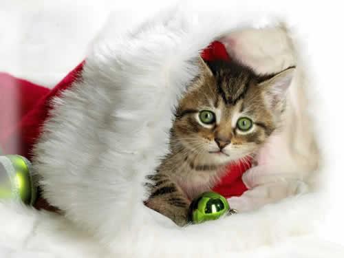 Quando animais viram presentes de Natal