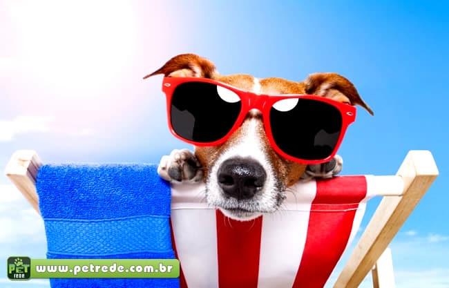 Óculos escuros para cachorros  exagero ou necessidade    PetRede 63a81674ce