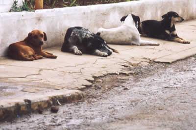 Dicas e cuidados para resgatar cães e gatos de rua
