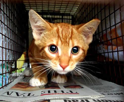 petrede-gaiola-gato-abandonado-doacao-adote