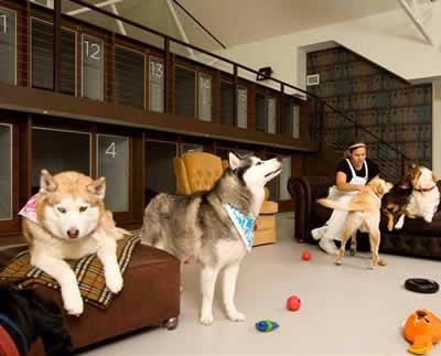 Chegada do fim do ano aumenta a procura por hotéis caninos em SP