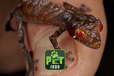"""Zoológico dos EUA tem novo filhote de """"lagartixa satânica"""""""