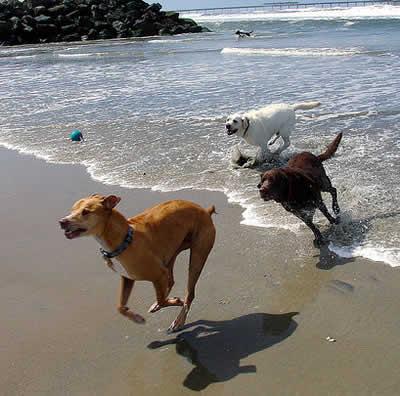 Praia exclusiva para cachorros