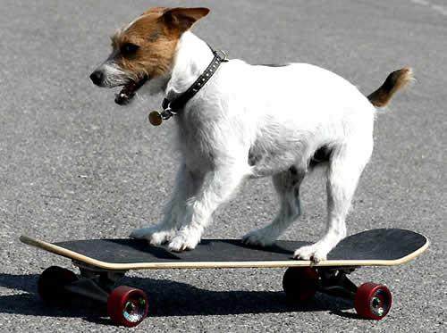 Cachorro skatista pode ser processado no Reino Unido