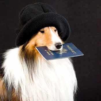 Animais devem ter documento para entrar no país