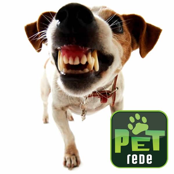 cachorro-rosnando-bravo-ataque-petrede