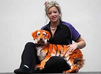 Dona pinta cadela para animal ficar parecido com tigre