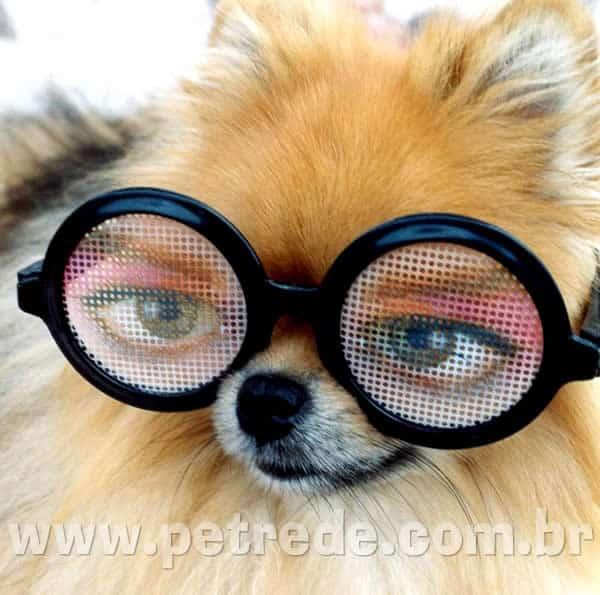 cachorro-de-oculos-petrede