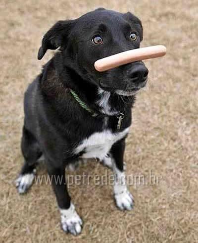Seu cachorro é ensinado?