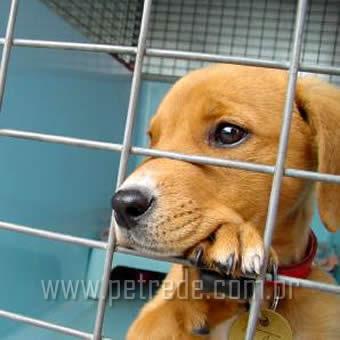 Comprar ou adotar animais de estimação?