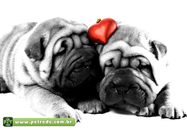 Você sabia que o seu bichinho de estimação também gosta de namorar?