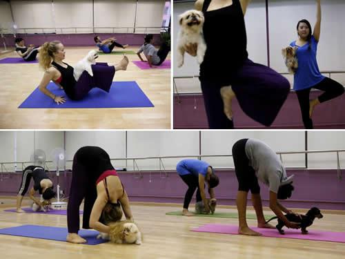 Chinesas levam cachorros para praticar 'ioga canino' em academia