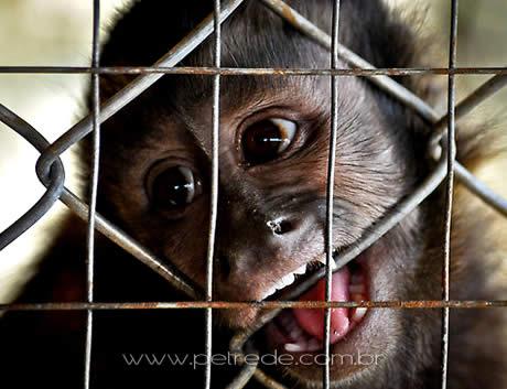A triste realidade dos animais confinados em zoológicos