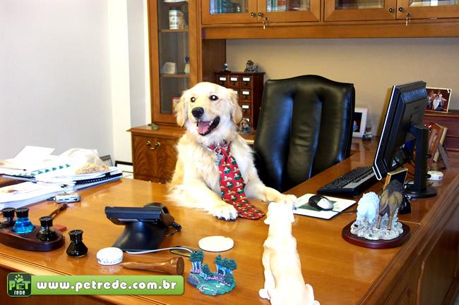 cachorro-labrador-trabalhando-escritorio-servico-emprego-executivo-petrede