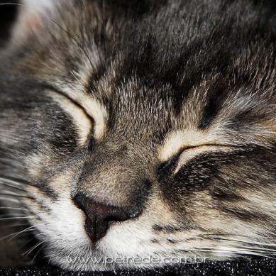 gato-olhos-fechados-dormindo-petrede