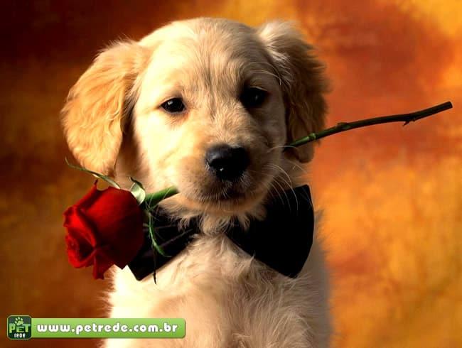 Contato com cães libera hormônio ligado ao amor