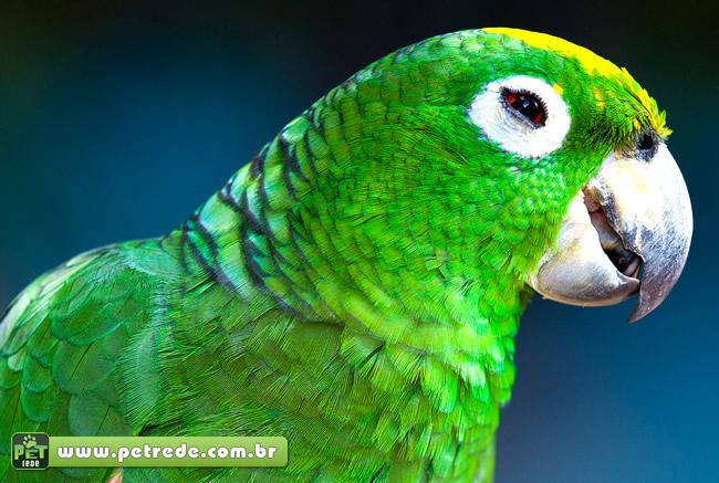 Você sabia que as aves fazem isso?