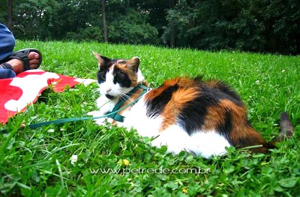 Coleira para gatos permite liberdade com segurança