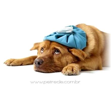 Novo tratamento contra câncer em cães e gatos chega a Curitiba