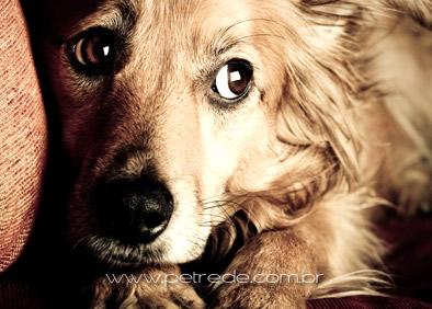 Seu cão tem medo de barulho? Você pode ajudar!