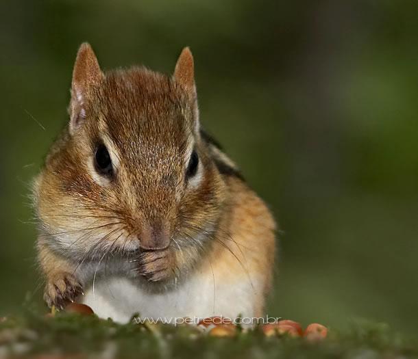 Esquilo fofo em câmera lenta