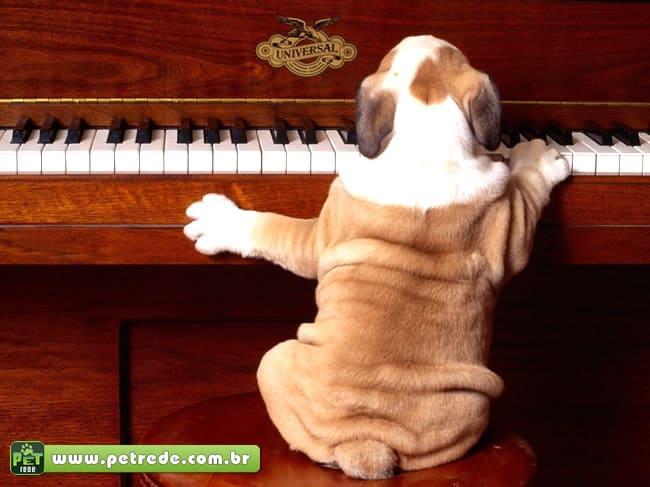Seu cachorro também toca piano e canta?