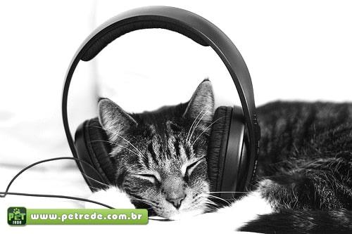 Gatos apreciam músicas feitas especialmente para eles, mostra estudo