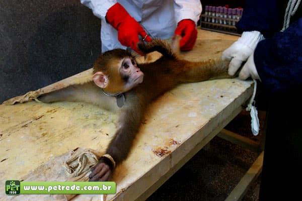 Campanha defende experimento em animal