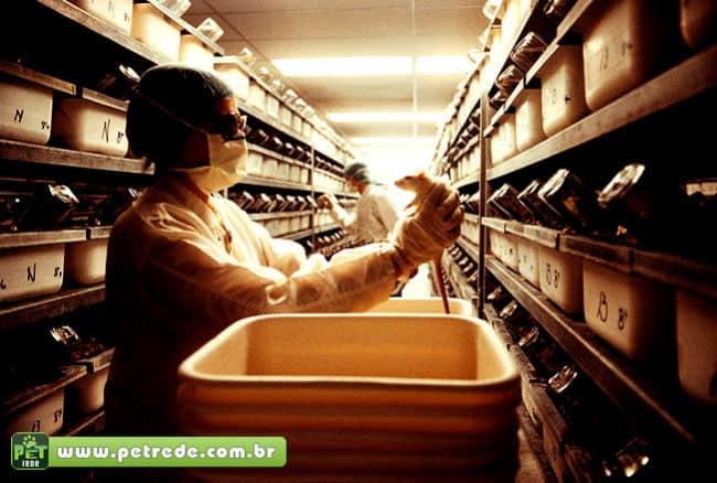 rato-cobaia-laboratorio-pesquisa-experiencia-petrede