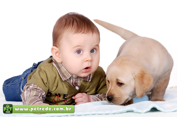 bebe-menino-cachorro-labrador-petrede