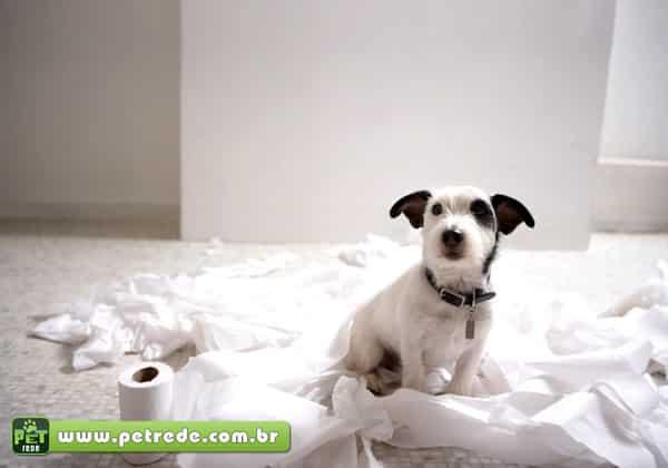 cachorro-banheiro-bagunca-petrede