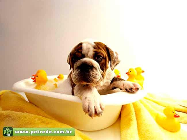 Aprendar a dar banho da maneira correta no seu cão