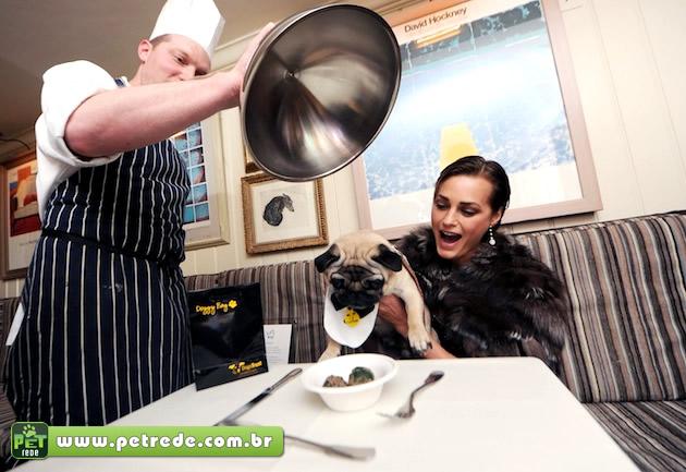 cachorro-dieta-almoco-prato-refeicao-janta-comida-alimento-petrede