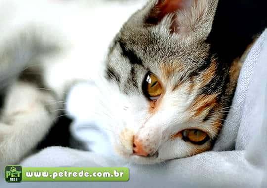 gato-deitado-olhar-petrede