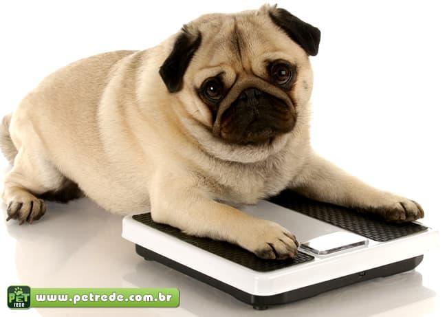 Entre um petisco e outro, seu cachorro pode ficar obeso. Cuidado!