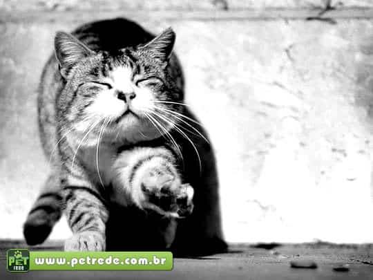 gato-andando-feliz-petrede