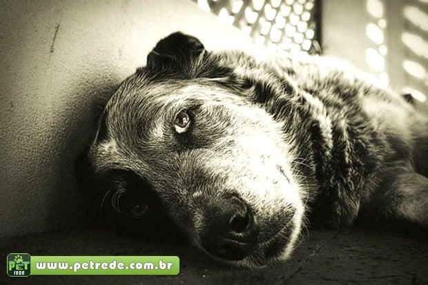 Tratado como 'filho', animal de estimação vive mais