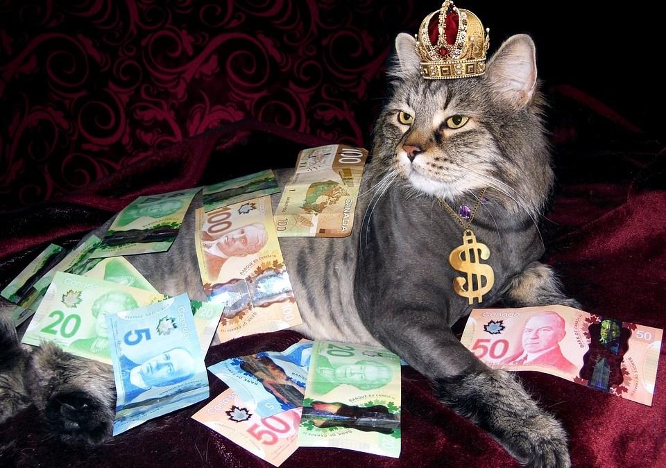 Gato recebia dinheiro do Bolsa Família
