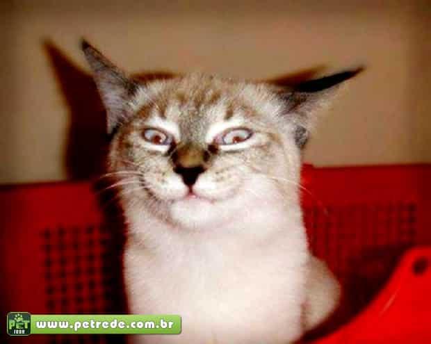 Seu gato está manipulando você, veja como