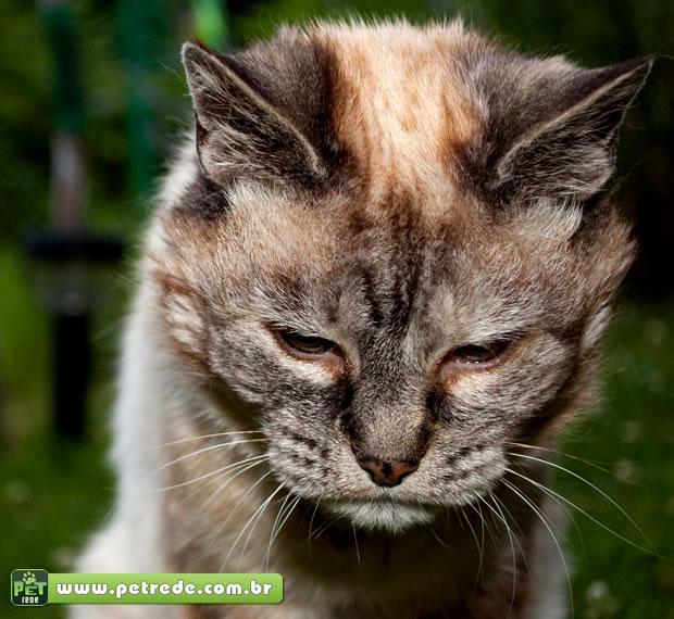 Cuidados com a nutrição beneficiam a saúde de gatos idosos