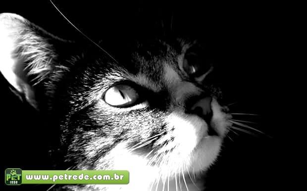gato-olhar-petrede